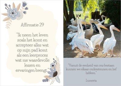 Affirmatie 29